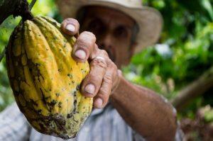 Sklaverei auf Kakaoplantagen