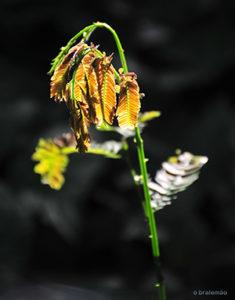 Die Erde wie eine Pflanze pflegen