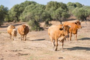 Coronavirus und die Landwirtschaft in Spanien