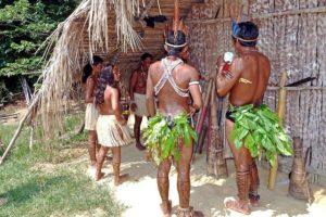 Heilmittel aus dem Amazonas