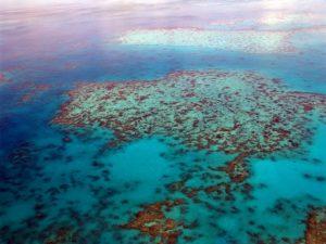 Klimawandel: Korallensterben am Great Barrier Reef