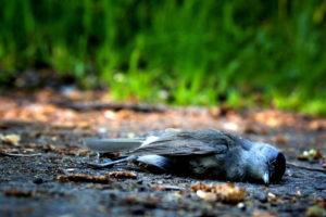Vogelsterben in Deutschland und Europa
