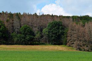 Das große Waldsterben in Deutschland