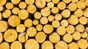 Illegaler Holzeinschlag ist inzwischen weltweit eine der größten Bedrohungen für die Wälder.