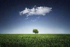 Die industrielle Landwirtschaft bedroht natürliche Lebensräume
