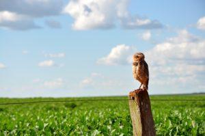 Brasilien: Sojaanbau für Europa