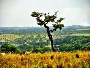 """Die dort """"gewonnen"""" Flächen dienen der Viehhaltung, aber auch ganz besonders dem Sojaanbau"""