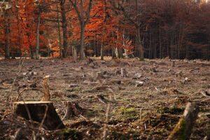 Rodung im Dannenröder Forst mit den Grünen