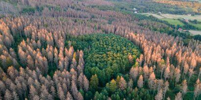 Das Waldsterben nimmt dramatische Ausmaße an
