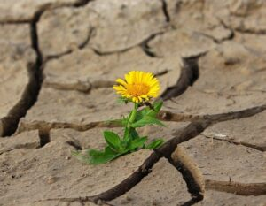 Ohne Wasser kommt es zu Konflikten, es geht dann um das nackte Überleben