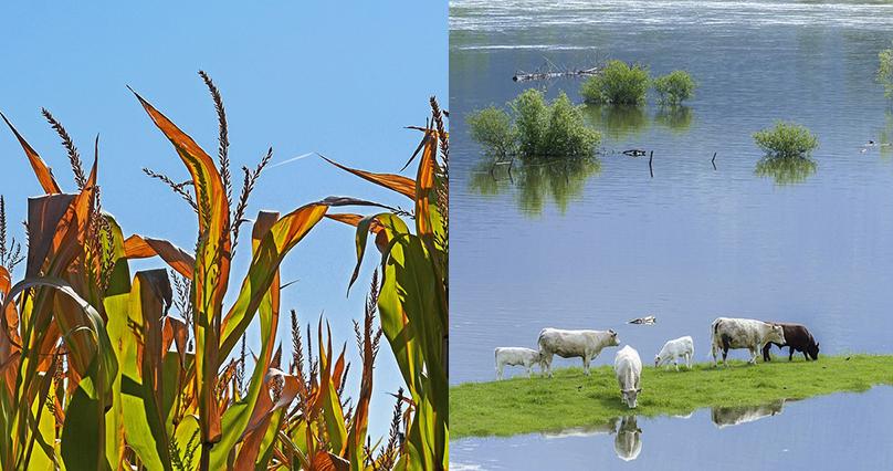 Klimawandel: Deutschland hat das 1,5 Grad-Ziel bereits überschrittenar überschritten hat