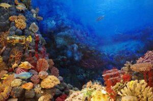 Klimawandel verursacht ein Korallensterben